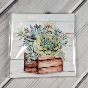 Succulent Planter Stretched Canvas